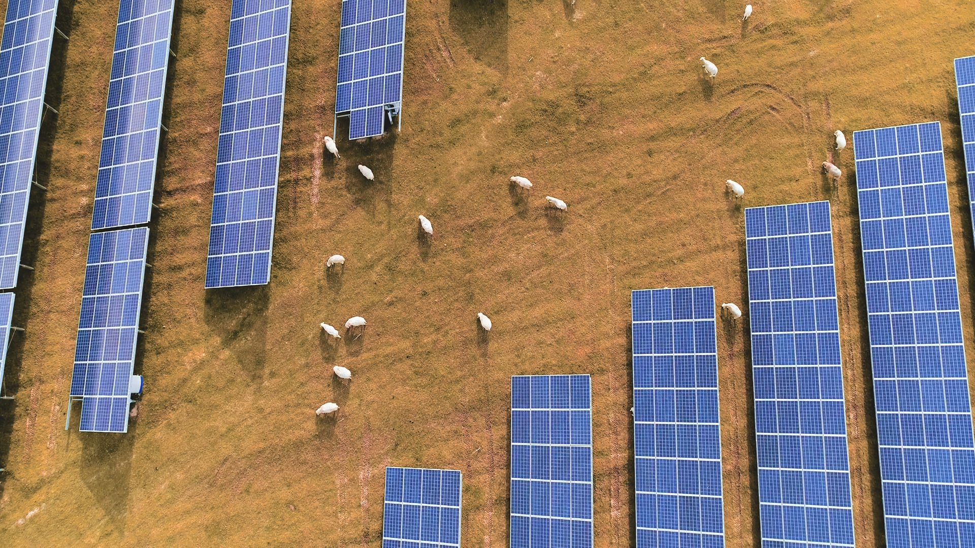 Why East Bay Homeowners Hate This Solar Power Plan